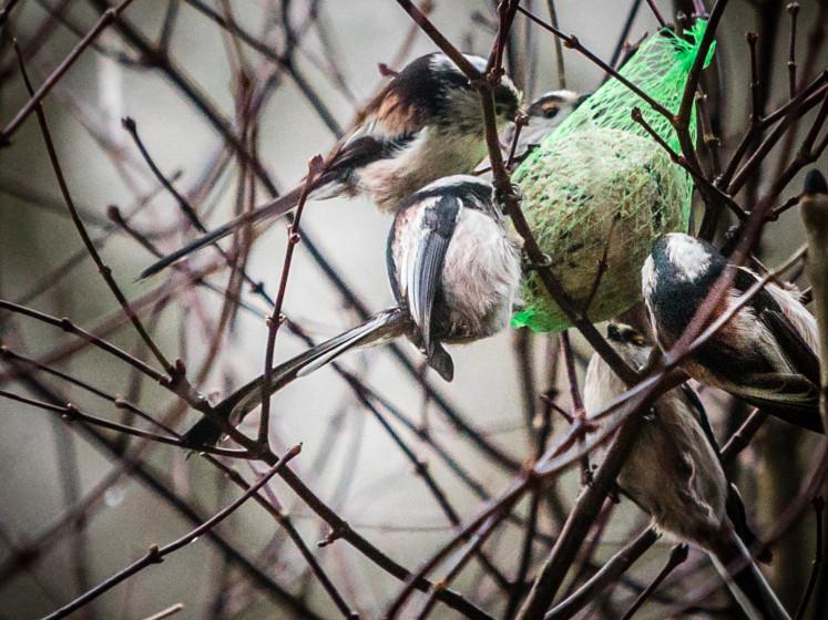 10 tips om huis en tuin te wapenen tegen de kou