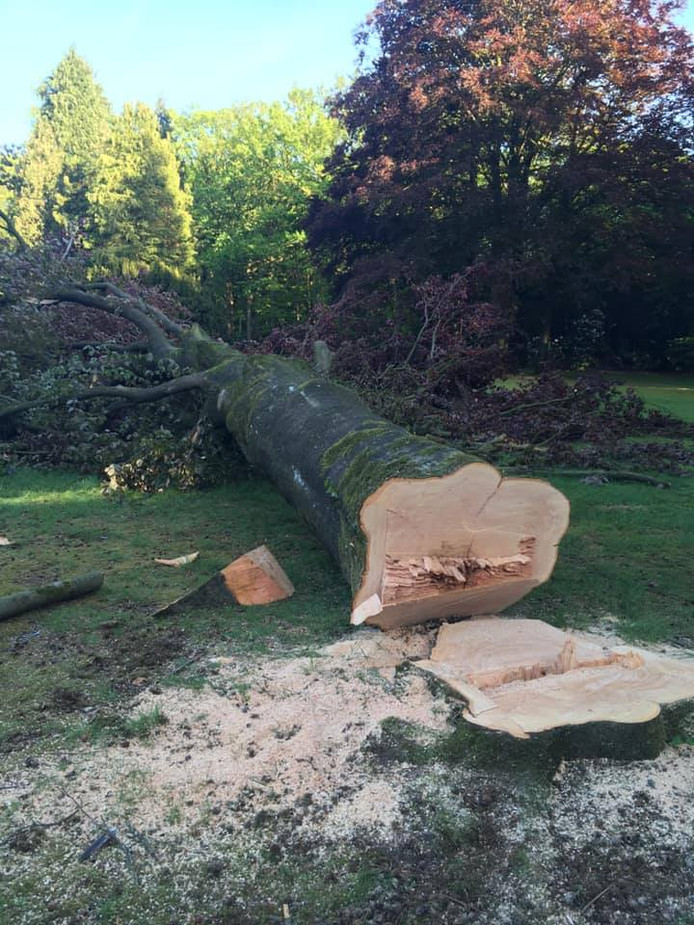 DSN vindt bomen kappen tijdens het broedseizoen 'onacceptabel'.