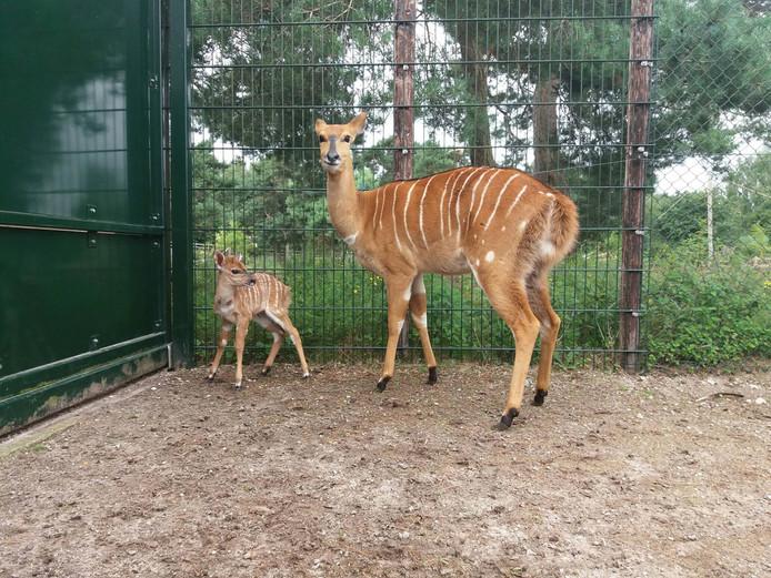 Annamarie met haar zoon.