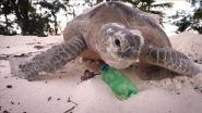 Dit Unesco-gebied is onbewoond, maar toch is het bedolven onder het afval: flessen, netten en slippers bedreigen bijzondere dieren