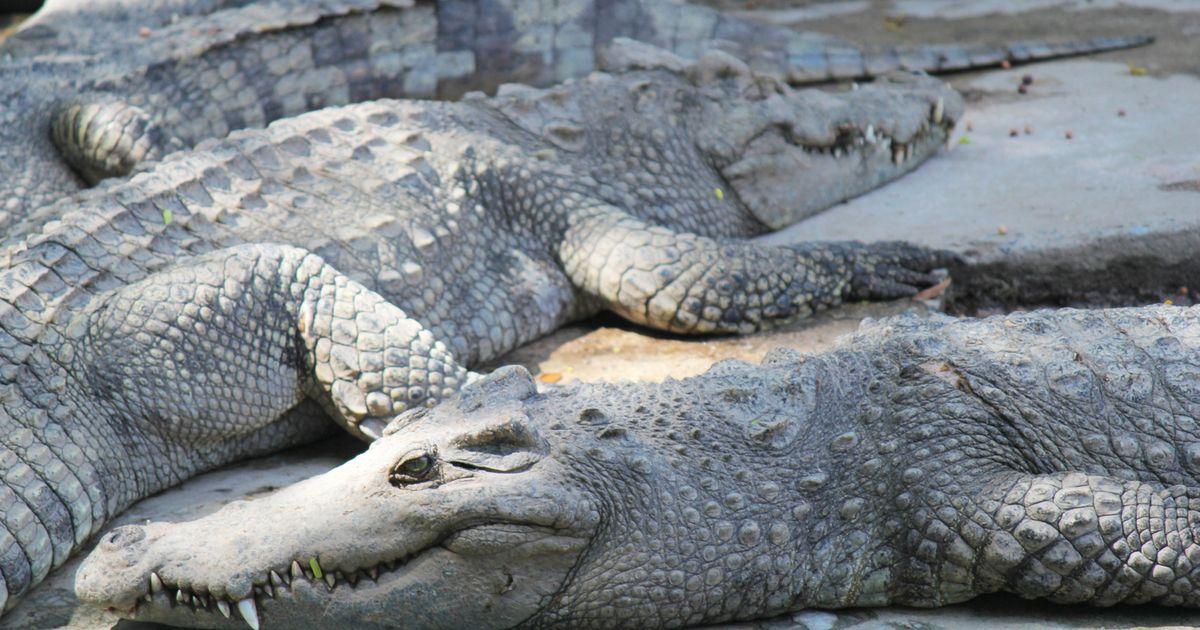krokodillenhorror bij herm s de echte kostprijs van een handtas van euro dieren. Black Bedroom Furniture Sets. Home Design Ideas