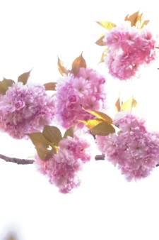 Volop genieten van de lentebloesem
