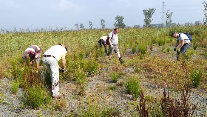 Vrijwilligers zoeken bomen en zeldzame planten.