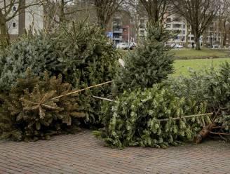 Kerstbomen deze week opgehaald in Stabroek