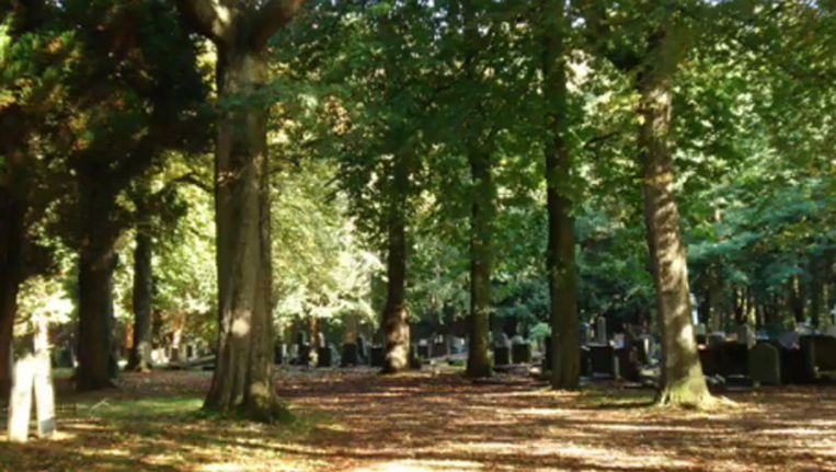 De Zuiderbegraafplaats in Assen. Beeld YOUTUBE