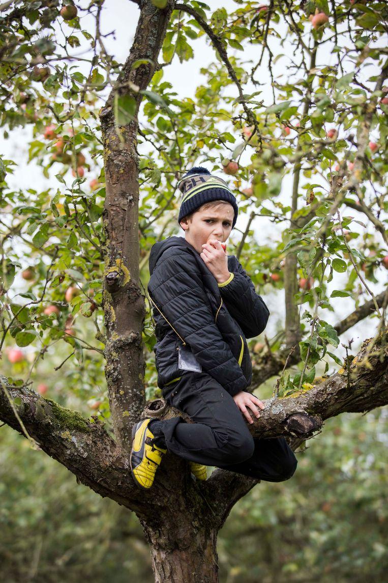 Bilzen de boom in op Alden Biesen. Kinderen mogen helpen met het fruit op rapen/ plukken.