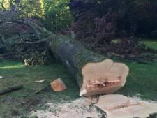 Politieke partij boos over bomenkap in Soesterberg: 'Onacceptabel in het broedseizoen'
