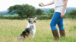 Honden begrijpen wel degelijk woorden die we tegen hen zeggen volgens nieuwe studie