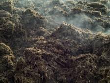 Albers mag meer mest verwerken in Zeeland: 'Provincie heeft zorgvuldig gekeken'