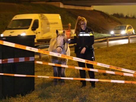 1000 euro boete voor verwaarlozing van paarden en runderen Zwetkade-Noord