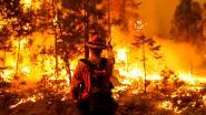 Brandweerman omgekomen bij bestrijden bosbranden Californië
