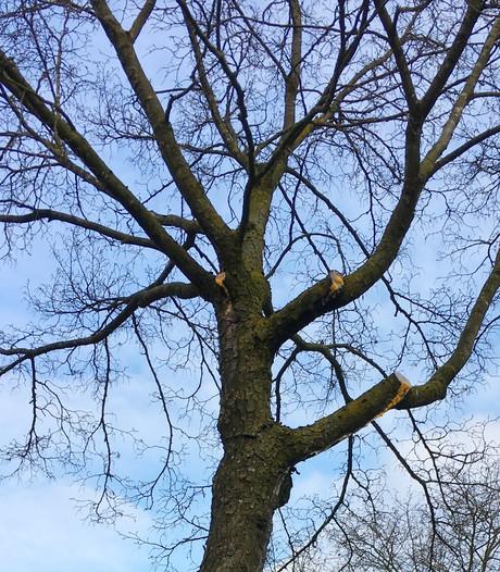 Raad Bronckhorst stemt in met bomenplan