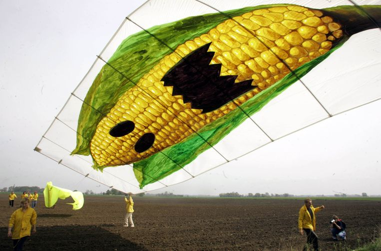 Actievoerders van Greenpeace laten een vlieger op als protest tegen genetisch gemodificeerde mais. Beeld afp