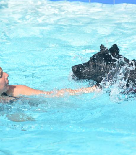 Honden nemen duik als afsluiting van zwemseizoen