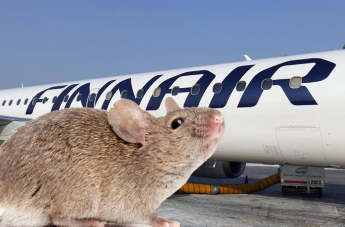 In een toestel van Finnair zaten muizen, waardoor de vlucht werd vertraagd.