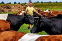 Fernand de Williegen uit Warmond tussen zijn Lakenvelder koeien.