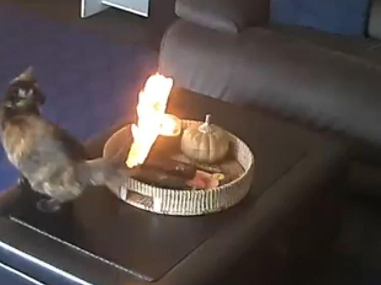 Staart schiet in brand, maar daar trekt deze kat zich niets van aan