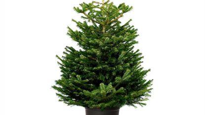 Kerstbomen voor kerstsfeer in centrum gezocht