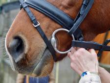 Paard overleden aan rhinovirus, manege Lelystad voorlopig op slot