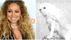 Bizar: Mariah Carey's ex vervangt haar door hond in nieuwe videoclip