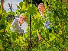 Wijn uit Capelle: het laten groeien van druiven blijkt nog best een technisch klusje