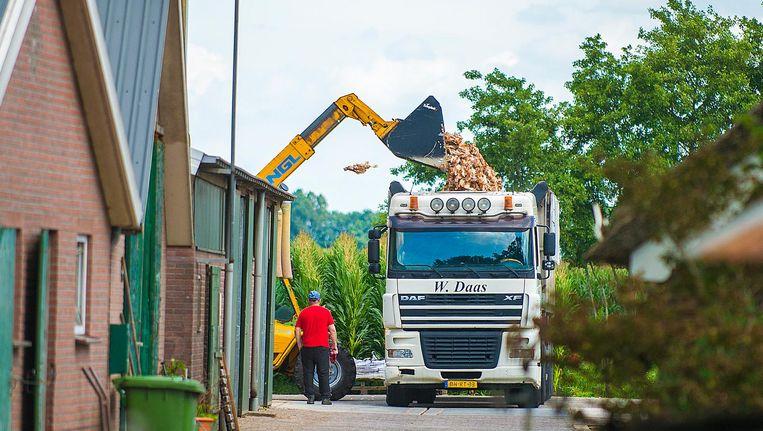 Onder andere in Kootwijkerbroek hebben pluimveehouders hun bedrijf geruimd. Beeld Maarten Sprangh