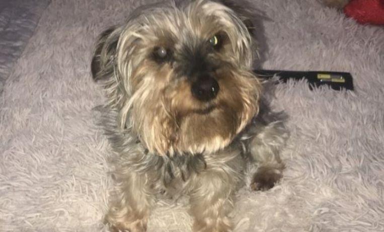 Hondje Millie overleed onverwachts. Baasje Emma McNulty was zo van streek dat ze zich afmeldde voor werk, tegen de zin van haar werkgever.