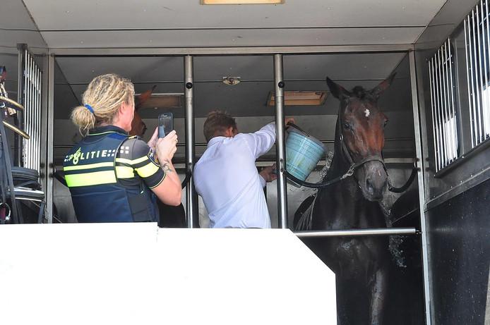 Omstanders hebben emmers met water over de paarden gegooid.
