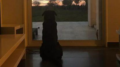 Hartverscheurende foto: hond van vermiste Sala wacht nog altijd op haar baasje