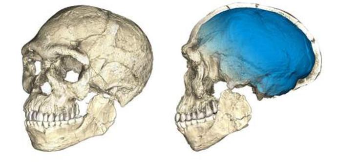 De wetenschappers merkten ook op dat het gezicht van de vroege homo sapiens zich al volledig had ontwikkeld.