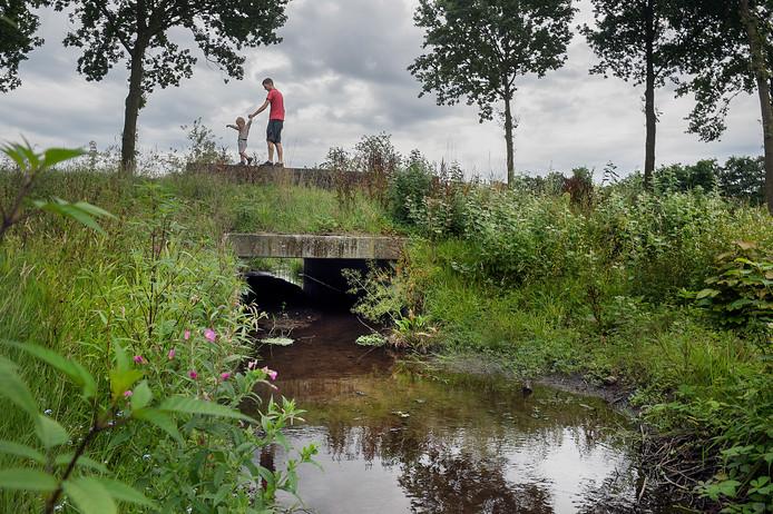 Natuur in het Renkums Beekdal op de grens van Renkum en Wageningen