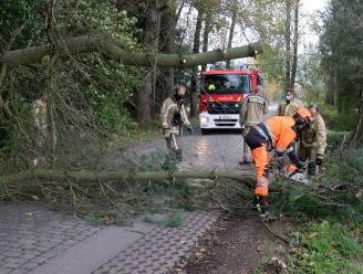 Stormwind zorgt voor omgevallen bomen
