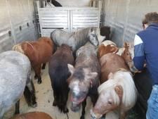 Vrouw opgepakt in Enschede voor ernstige verwaarlozing van paarden