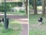 Bewoners van de wijk Doonheide in Gemert proberen het zo vaak mogelijk te melden als ze de bijtgrage hond weer zien lopen.