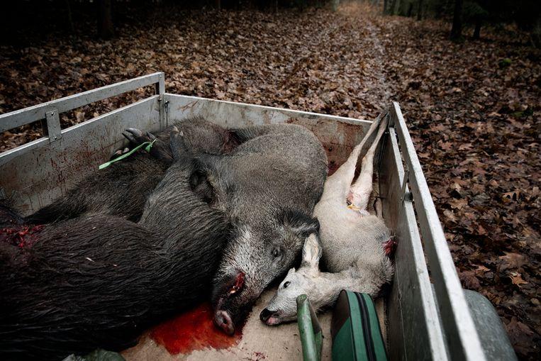 Het geschoten wild van de dag. Beeld Foto's Daniel Rosenthal / de Volkskrant