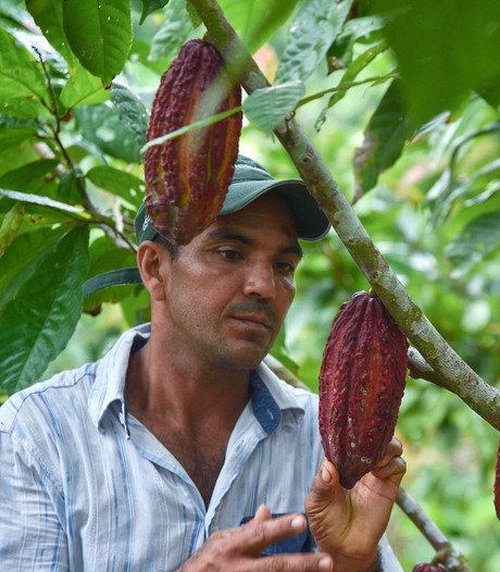 Door Nederland gefinancieerde plant in strijd tegen Colombiaanse coca