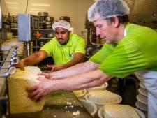 Trotse Aaron uit Eritrea vindt de baan van zijn leven: Kaasmaker op een oer-Hollandse boerderij