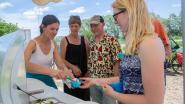 Vlinderijs, een nieuw Pajots streekproduct van de Smulschuur Bogaerde