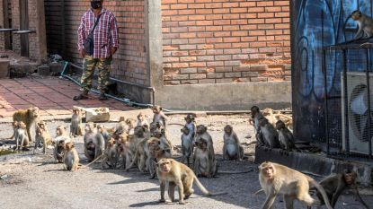 """Thaise stad opgeschrikt door gewelddadige 'apenbendes': """"Wij moeten in een kooi leven"""""""
