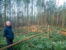 Onbegrip om honderden gekapte bomen bij Ermelo: 'Een slagveld'