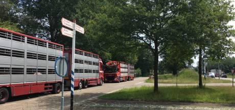 Plan voor overkapping bij Vion moet soelaas bieden:  varkens even niet welkom wegens hitte en storing