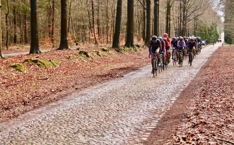 Het vrouwenpeloton op de Boslaan tijdens de Ronde van Drenthe Beeld Flip van Doorn
