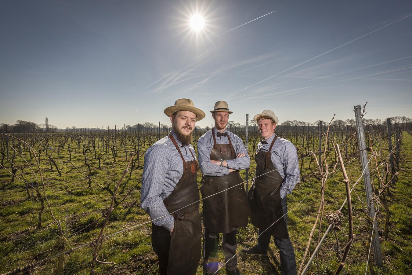 Robert Spenkelink, Jeroen Ziel en Rob Kleinsman in hun wijngaard.