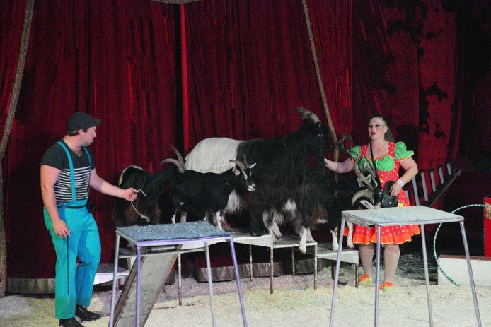 Circus Barani zou een paar voorstellingen in Bergen op Zoom geven.