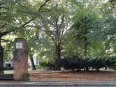 Deze twee koninklijke bomen in Dordrecht hebben een eigenaardige geschiedenis