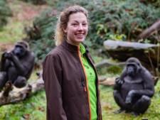 Nicole (37) uit Holten helpt gorilla's bij 'first date' in Taiwan: 'Het mannetje duikt er bovenop'