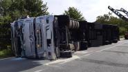 Vrachtwagen met 605 biggen gekanteld, meer dan honderd dieren overleden
