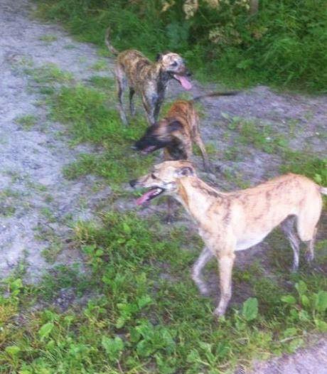 Dordtenaar verliest zijn hond Whoopy door noodlottig ongeval op A16: 'Ik ben er helemaal kapot van'