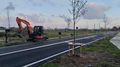 Nieuwe bomen langs Westkerksestraat, ook maximumsnelheid aangepast