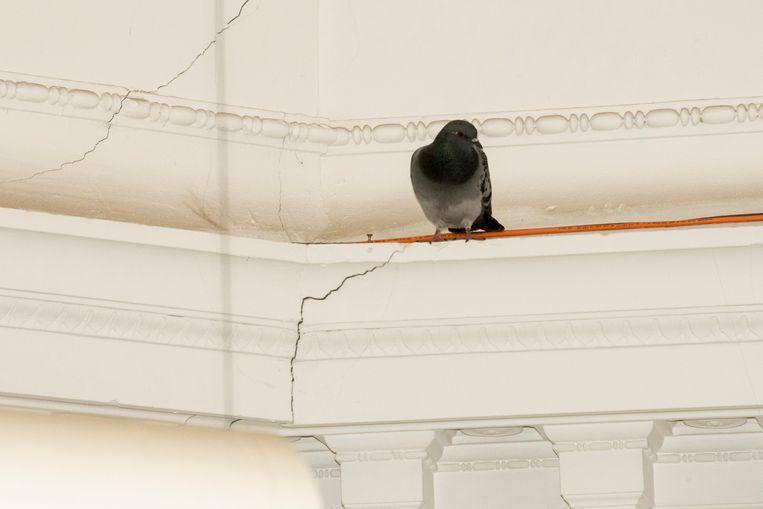 water in jubelparkmuseum: duiven vliegen het gebouw binnen en buiten door de gaten in het dak